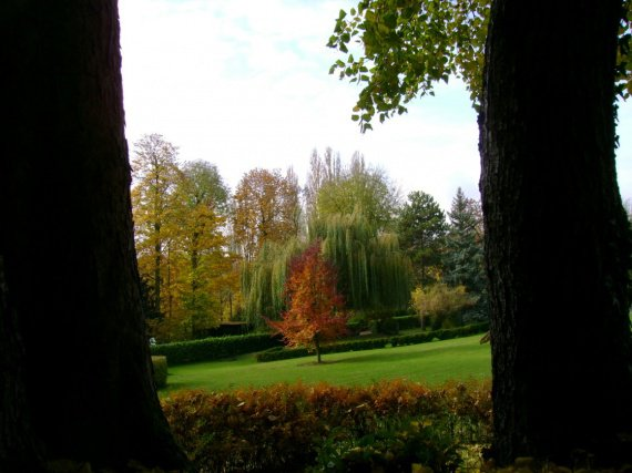 le hêtre pourpre au jardin zabh 09