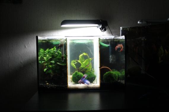 aquario-img_2207-img