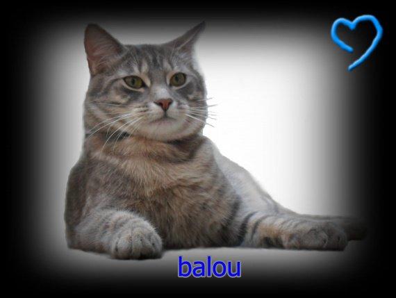 balou22