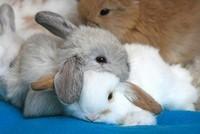 5-lapins-calins