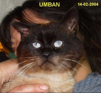 Umban_-_04_-_petit_blog