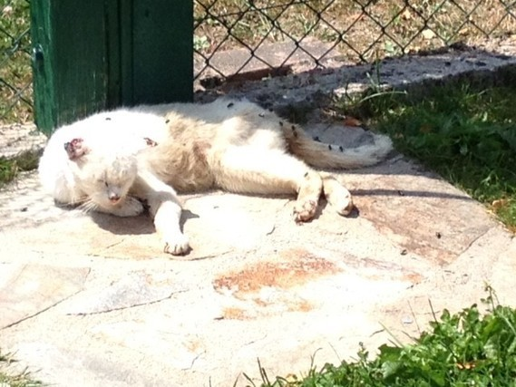 chat 1 creuse