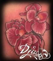 Les ors qui dés - Roses elle sont. Tatouage d'Orchidées roses néotrad. Tatouage Calypso Québec Tatto