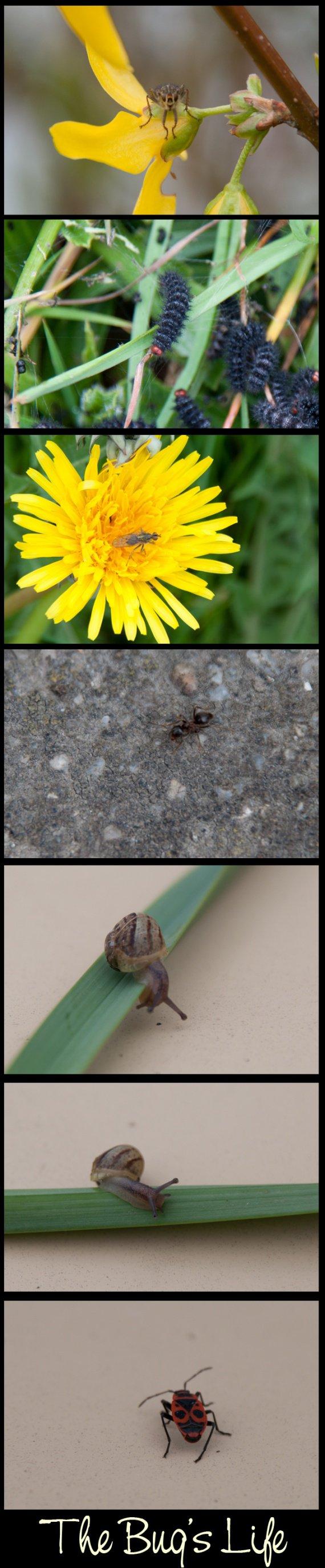 the bug's life