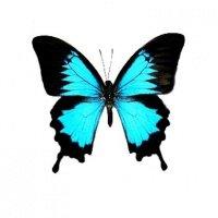 Tatouage bleu papillon