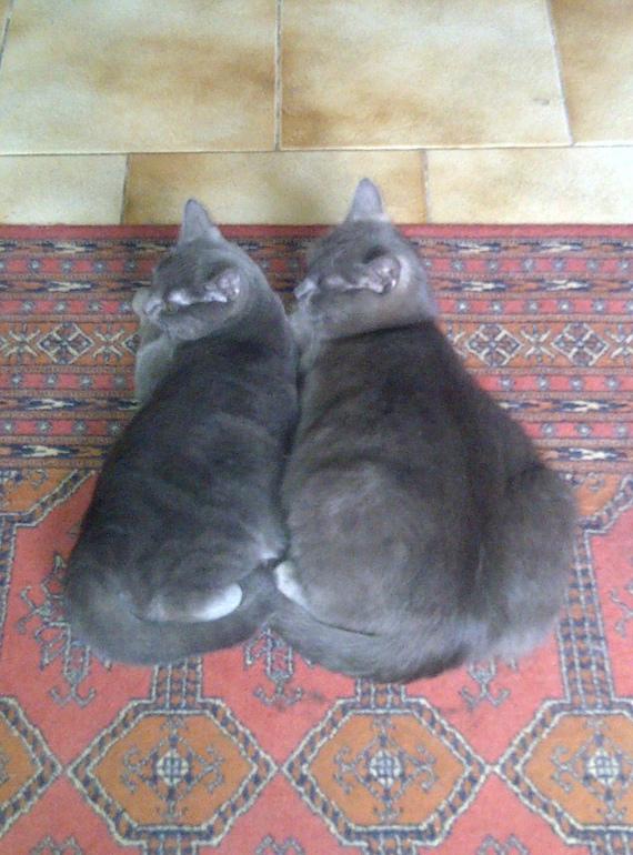 Kate et Mini