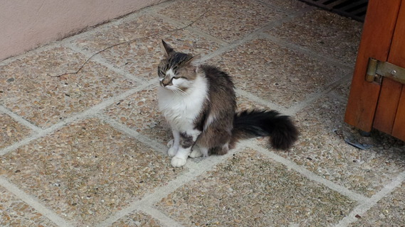 Chat inconnu