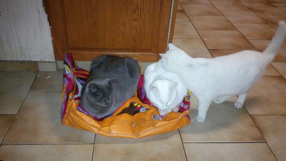 Kate, Little Brown et Crousti aiment les sacs de courses