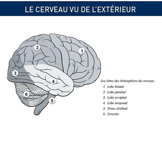cerveau-vu-ext