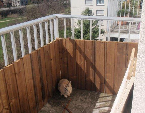 balcon am nag mon lapin est un crado hamsters cochons d 39 inde lapins forum animaux. Black Bedroom Furniture Sets. Home Design Ideas