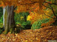fall-of-autumn-leaves-wallpaper