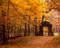 Nature_Seasons_Autumn_Yellow_autumn_leaves_018859_