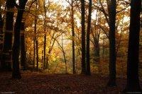 12_foret_couleurs_automne