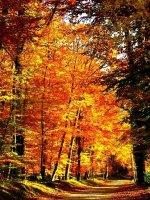 foret-automne-big