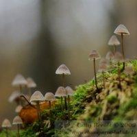 automne-photographier-mousse-champignon-foret