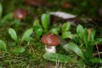 champignons00066