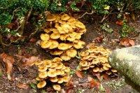 champignons00067