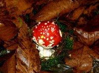 champignons00079