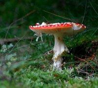 qui-a-croquer-dans-le-champignon