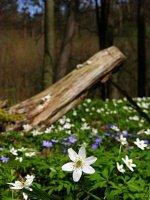 11_Dzikiekwiatyy