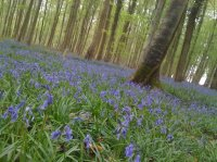 Forêt-de-Lyons-au-printemps