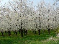 paysages-foret-noire-printemps-L-3