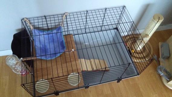 Cage Totoro