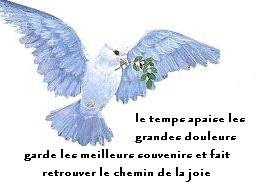 Colombe recueillement