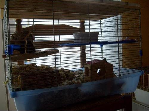 gerbilles id es d 39 am nagement de cage hamsters cochons d 39 inde lapins forum animaux. Black Bedroom Furniture Sets. Home Design Ideas