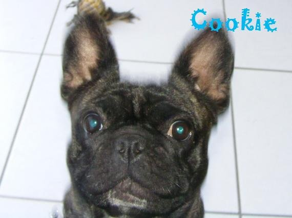 concours-cookie-gros-yeux-img