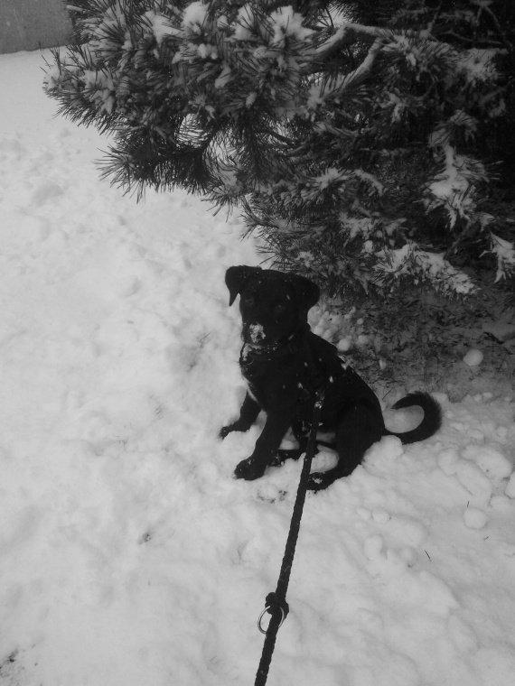Elvis première neige