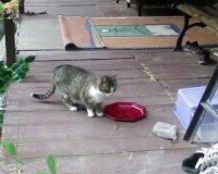 la visite du chat