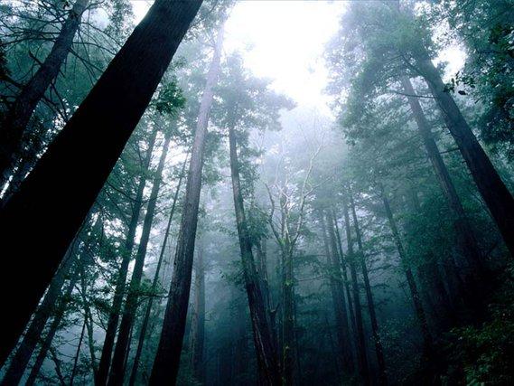 Forêt Summerboy