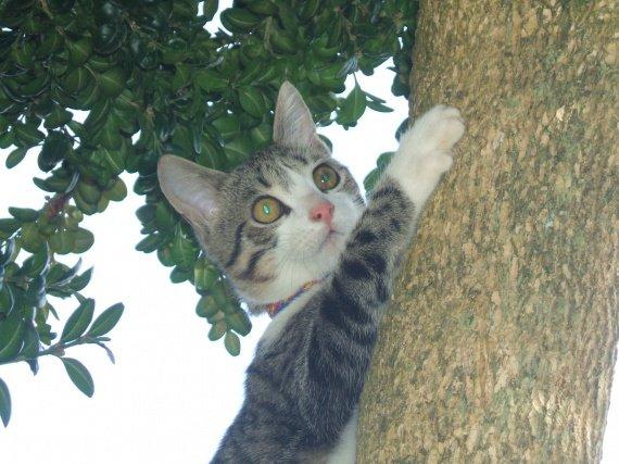 Scoubidou du haut de son arbre
