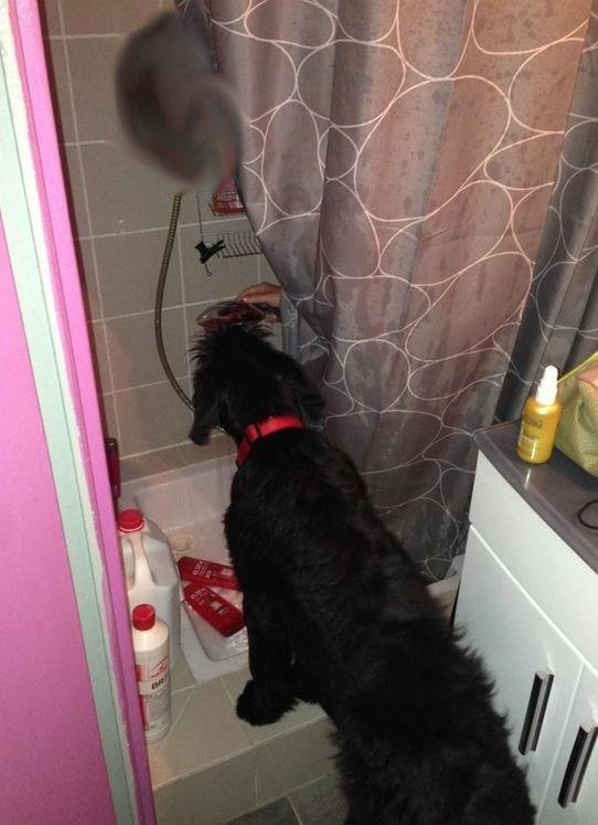 la douche .