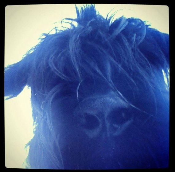 selfie .