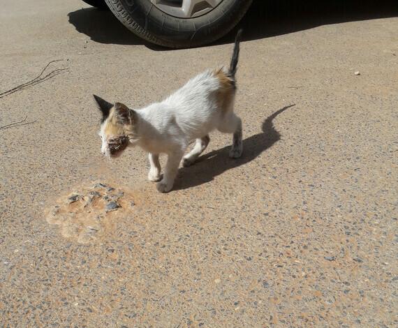 chaton soigné 1