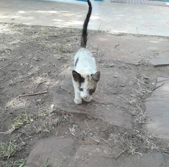 chaton soigné 3
