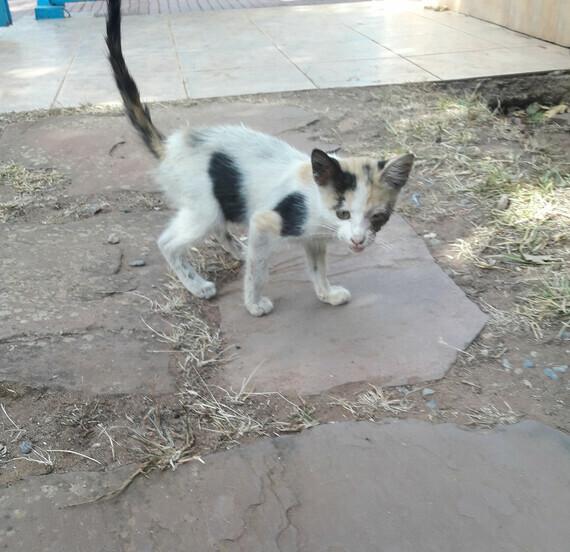 chaton soigné 4