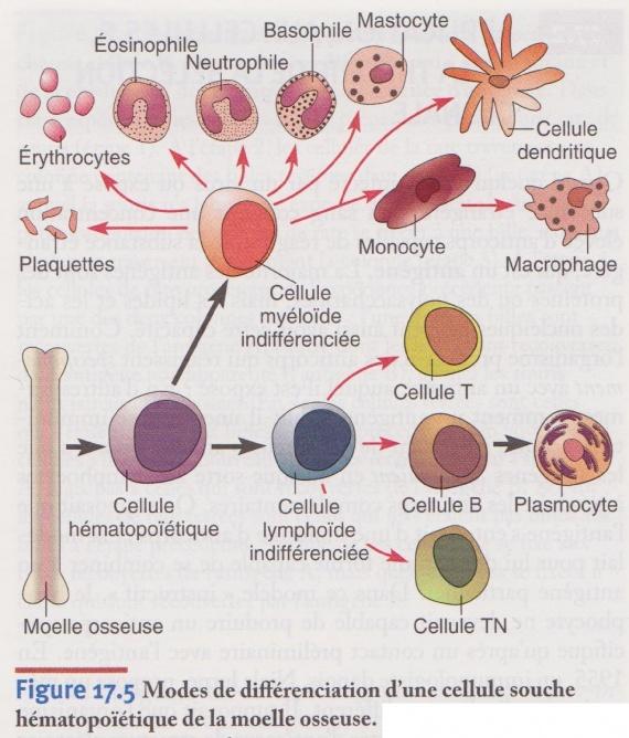 immunologie et le SIDA. - Intelligence - FORUM Santé