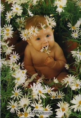 photo de bebe fleurs