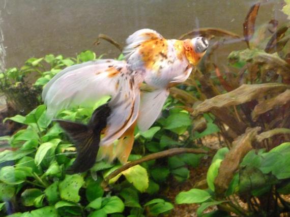 Poisson rouge qui reste au fond aquariums et vivariums for Poisson rouge reste fond aquarium