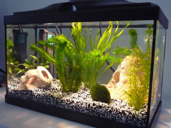 Aquarium de 20l et poissons aquariums et vivariums for Aquarium poisson rouge nettoyage