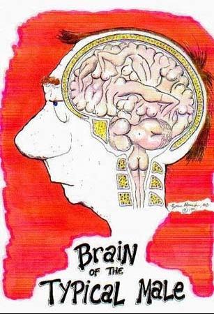 cerveau_m