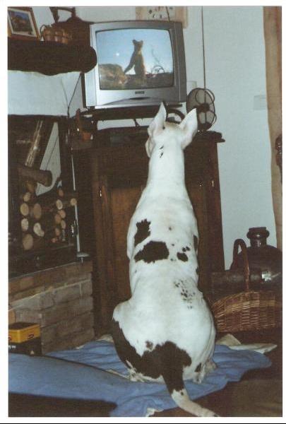PHOTO tara devant tele