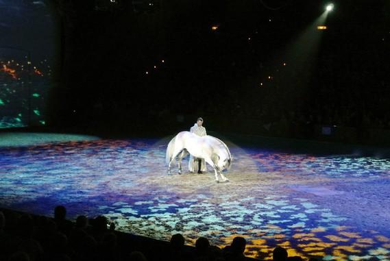 le cheval salue la foule