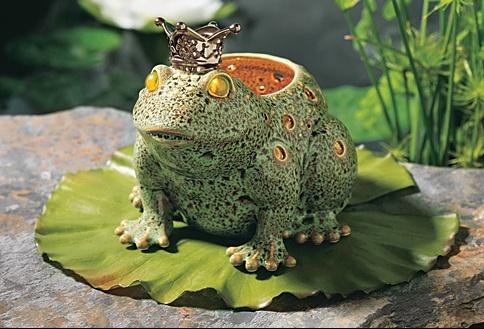 animals-frog-prince-big