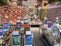 Le marché aux fleurs