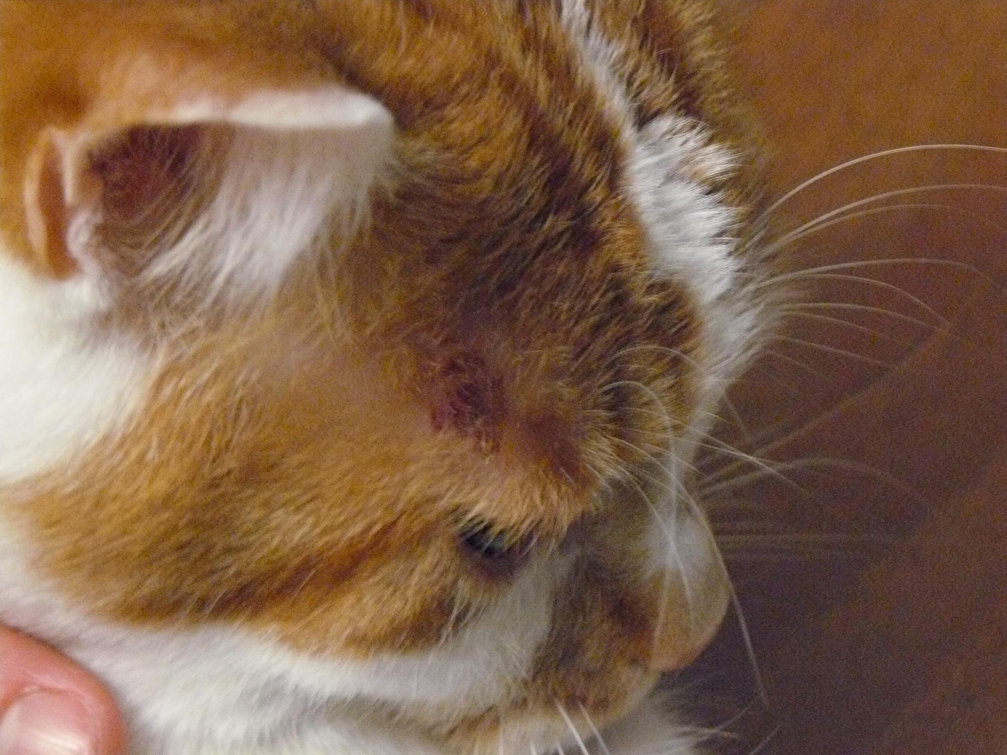plaque rouge chat