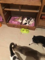 chats du refuge